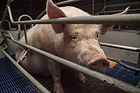 ADO Animal Legal Centre - Submissions