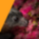 POCTAR VIC 2019.png