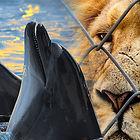 2019-NSW-Inquiry-circuses-cetaceans.jpg