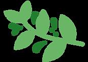 vecteur_plantes_01_nioumi-03_modifié_mod