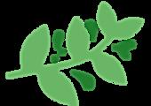 vecteur_plantes_01_nioumi-03_modifié.png