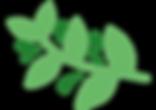 vecteur_plantes_01_nioumi-03.png