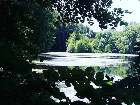 La Forêt de Vallin (La Petite Brocéliande)
