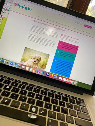 New online Puppy Class for each litter