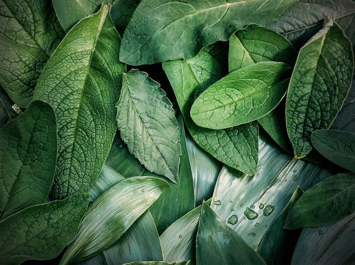 vihreitä lehtiä