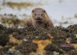 watching otter.jpg