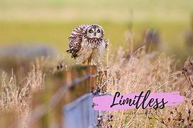 cropped owl.jpg