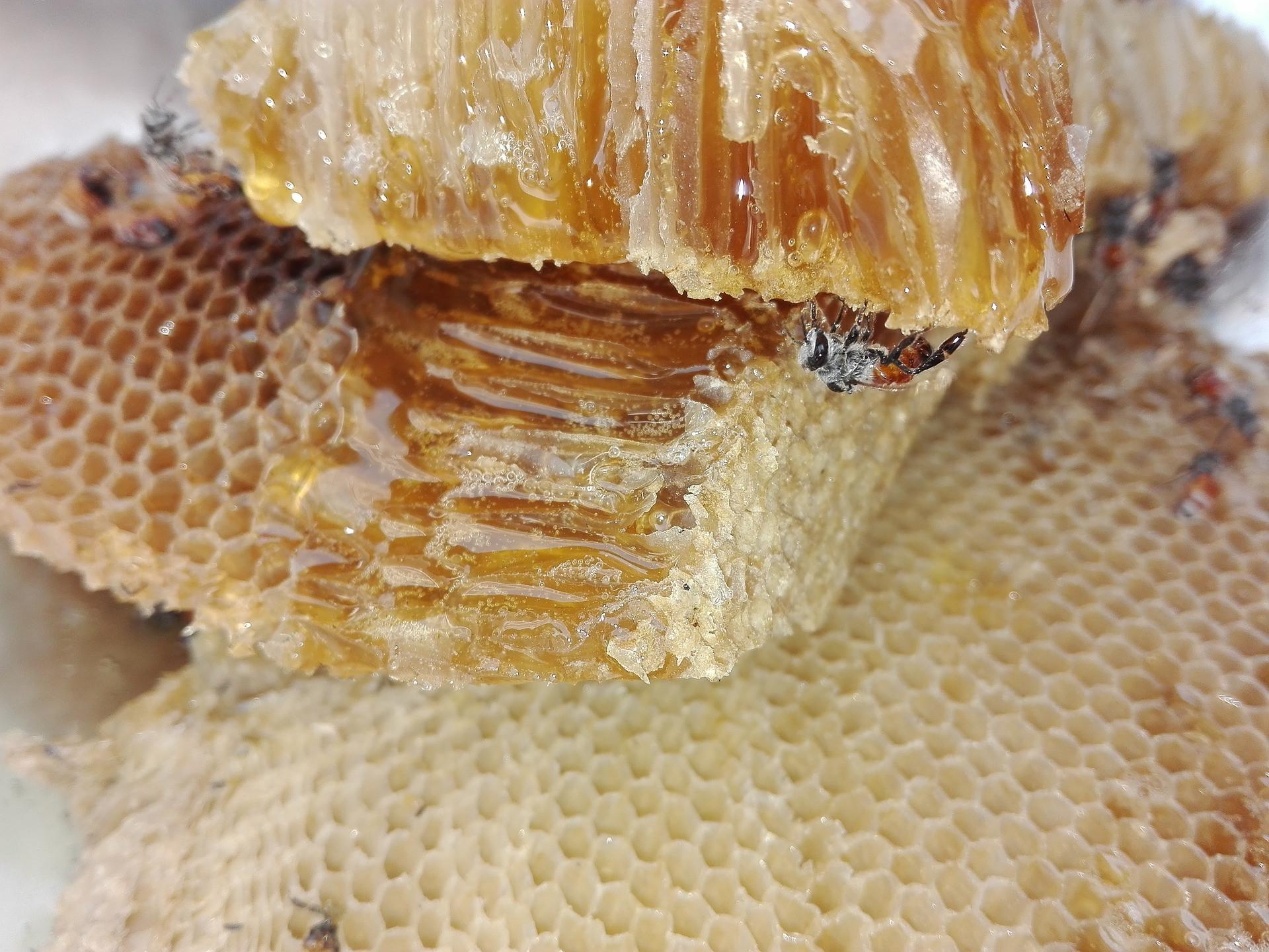 honey-1637114_1920.jpg