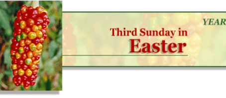 5 May 2019 - Third sunday of easter