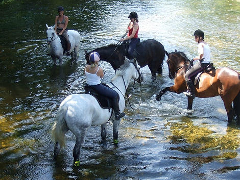 Horses-water.JPG
