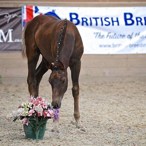 British Breeding.jpg