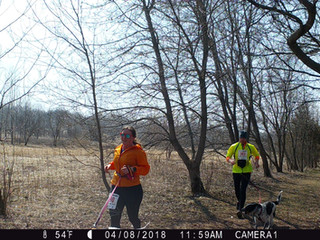 CANICROSS MIDWEST CHAMPIONSHIP!!! HILLY AND FUN!!!