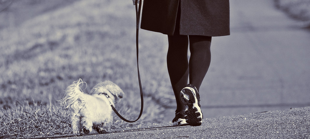 Professional dog walker in Palm Beach Gardens