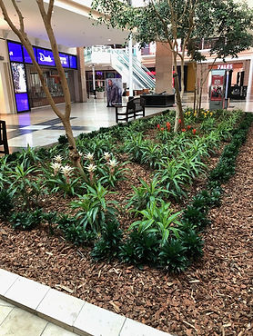 Plants in mall
