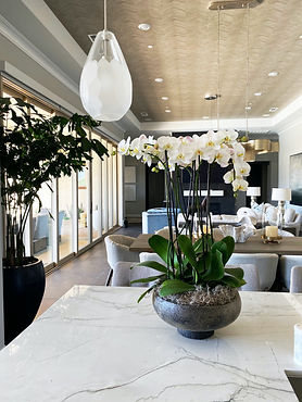 Orchids in home