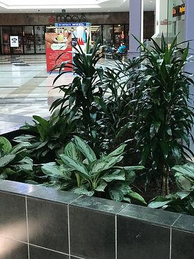 Big planter by mall elevator
