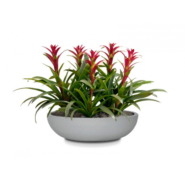 CurbSide Table Top Bowl Planter