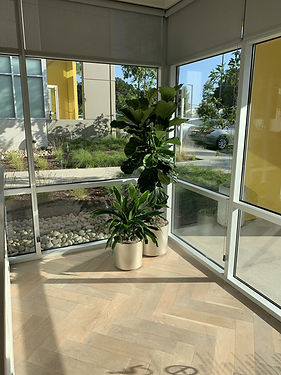 Two plants by a window