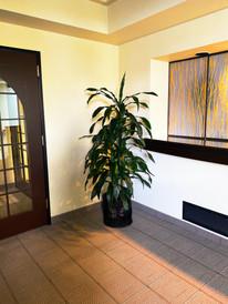 one green plant on a corner.jpeg