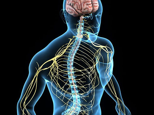 neurological-system-1513337301458.jpg