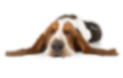 shutterstock_151341212_clipped_rev_1.png