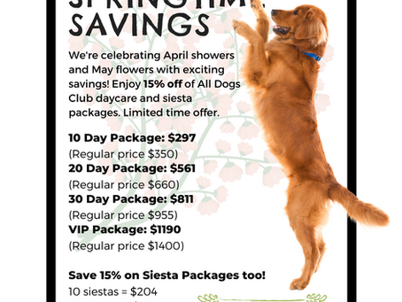 Super Springtime Savings: Save 15% on Daycare and Siesta Packages!