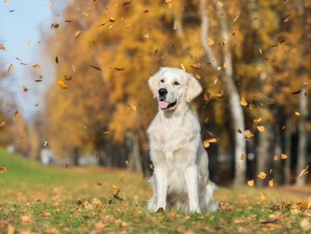 5 Dog-Friendly Fall Activities