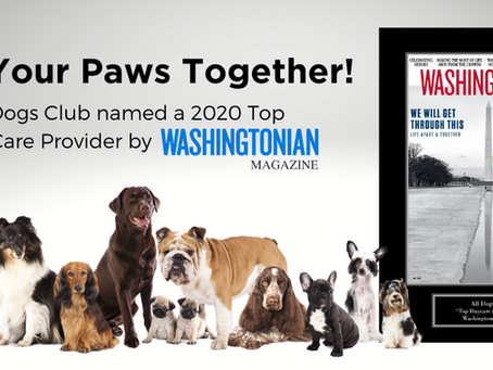 All Dogs Club Named Top Pet Care Provider by Washingtonian