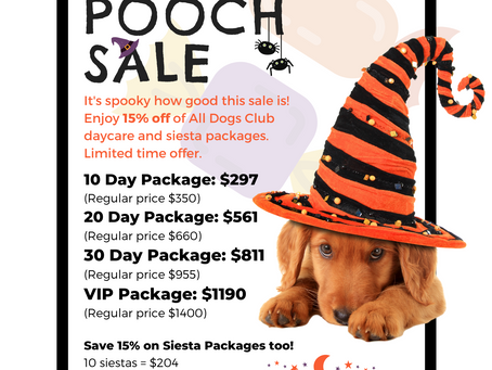 Spooky Pooch Sale: Now Through Monday 11/2/20