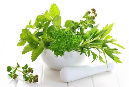 Top 5 Herbs for Pain Relief
