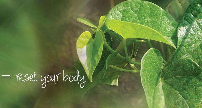 Top 5 Herbs for Detoxifying the Body