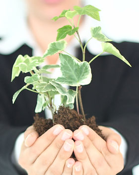 Présentation des plantes
