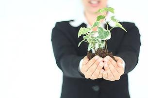 Pflanze Präsentation