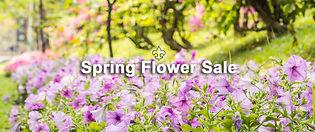 purple-petunia-Spring-Sale-1.jpg