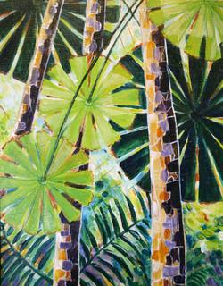 Fan Palms ( little)