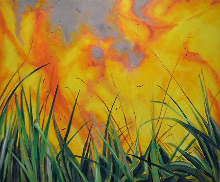 Cane Fire IV
