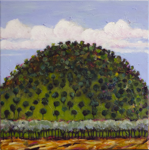 Hill near Coolah