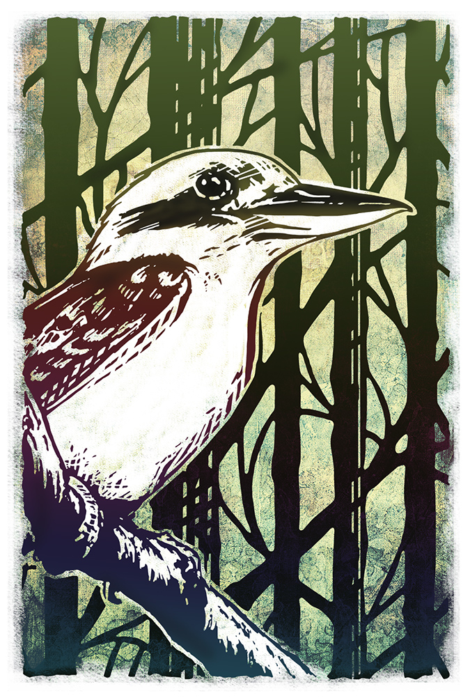 Forest Kookaburra