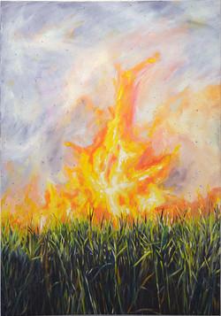 Cane Fire 2