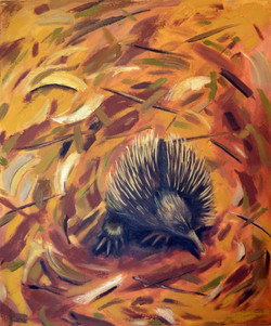 Echidna Goes out in the Wind