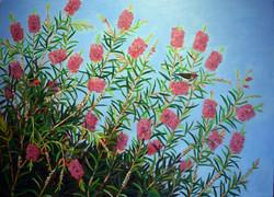 Callistemon & Scarlet Honey Eaters