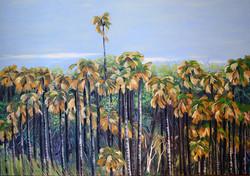 Angourie Palms 2