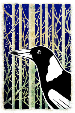Forest Magpie