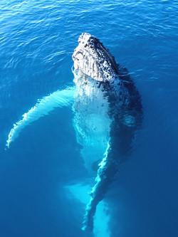 Kona Whale Watch & Reef Snorkel Adventure!
