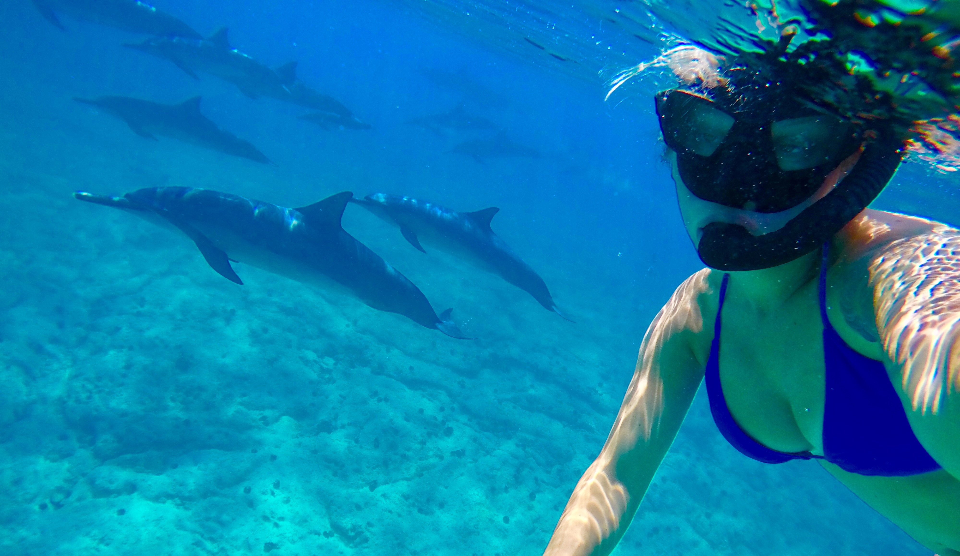 snorkeling by dolphins