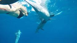 kona dolphin tour