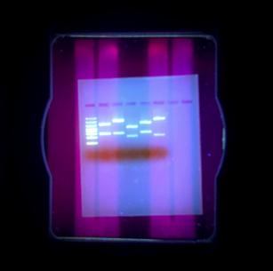 Glowing PCR
