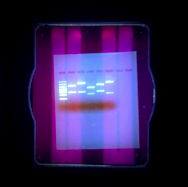 Glowing PCR