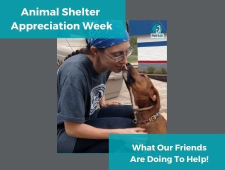 Animal Shelter Appreciation Week 2019: What Our Friends Are Doing