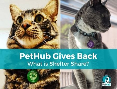 PetHub Gives Back: What Is Shelter Share?